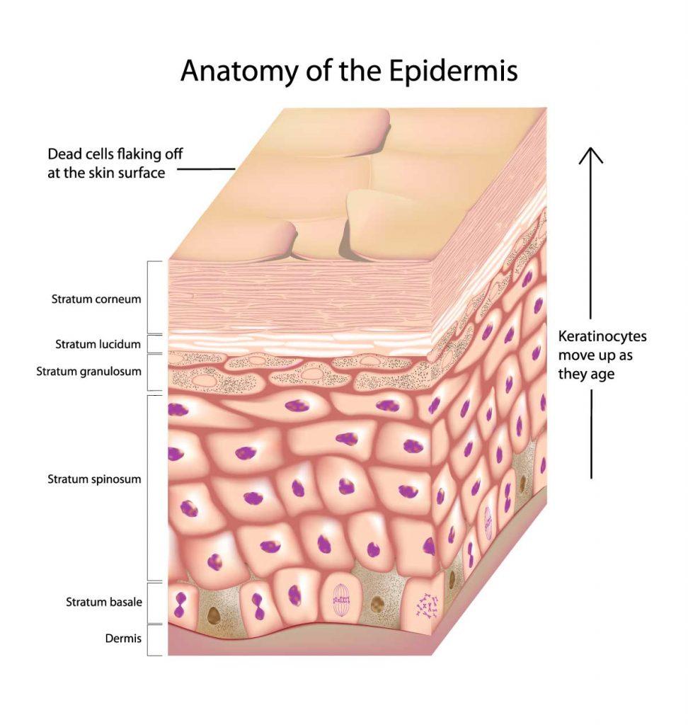 Rejuvenation And Peeling Mechanism